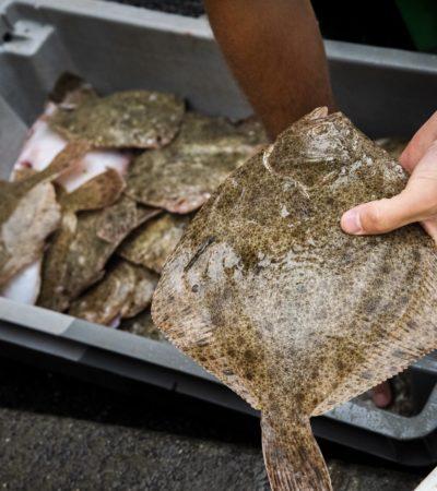 picture Quels sont les poissons avec peu d'arêtes ?