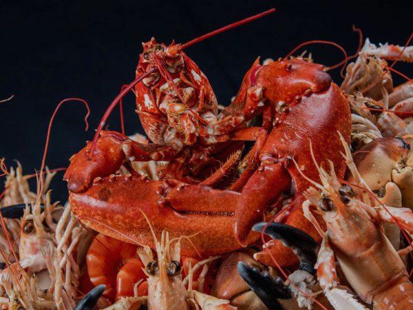 image Plateaux de fruits de mer