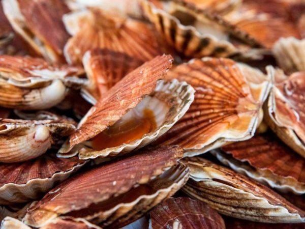 image Fruits de mer & Poissons